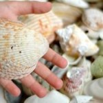 The simple joy of collecting shells can last long after summer is over